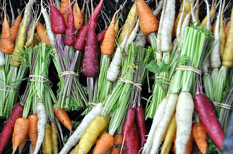 the abundant radish varieties; French Breakfast, Helios, Plum Purple and the Philadelphia White Box are red, yellow, white and purple, each with their own taste and texture.
