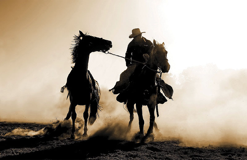 My Community Highly Commended Taralga Rodeo by Annette Blattman This hard-working cowboy was on round-up duty, catching the bucking broncos after they'd disposed of their passengers. Horse and rider made a nice silhouette against the backlit dust.