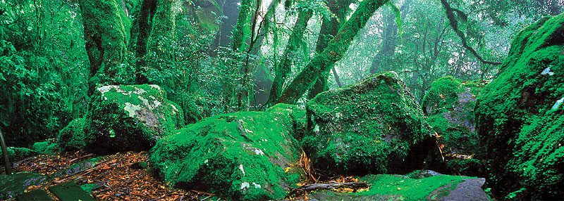 My Escape Highly Commended Point Lookout By Evelyn Owen New England NP, a fine rain intensified the beautiful colour palette, creating a wonderland of emerald mossy boulders and lichen-covered foliage dissolving into the shrouded rainforest.