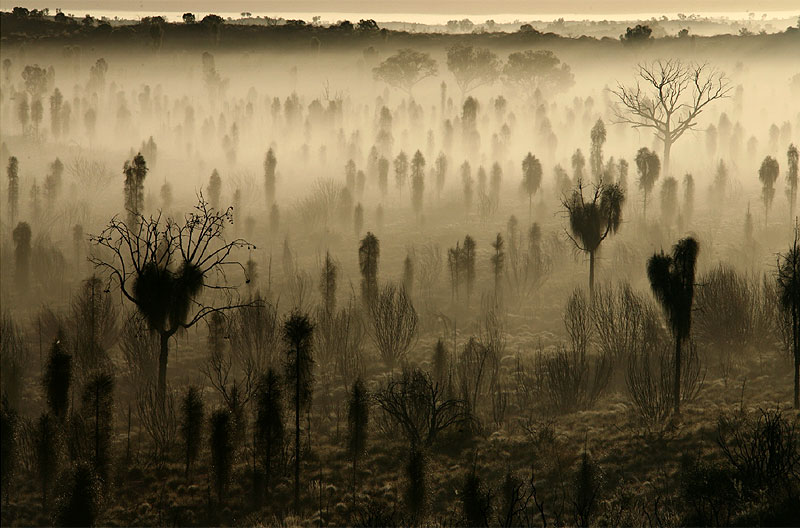 3. Desert Oaks in the Mist, By Jocelyn Pride