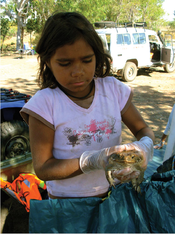 Aboriginal kids here are full bottle on the scourge of the toad