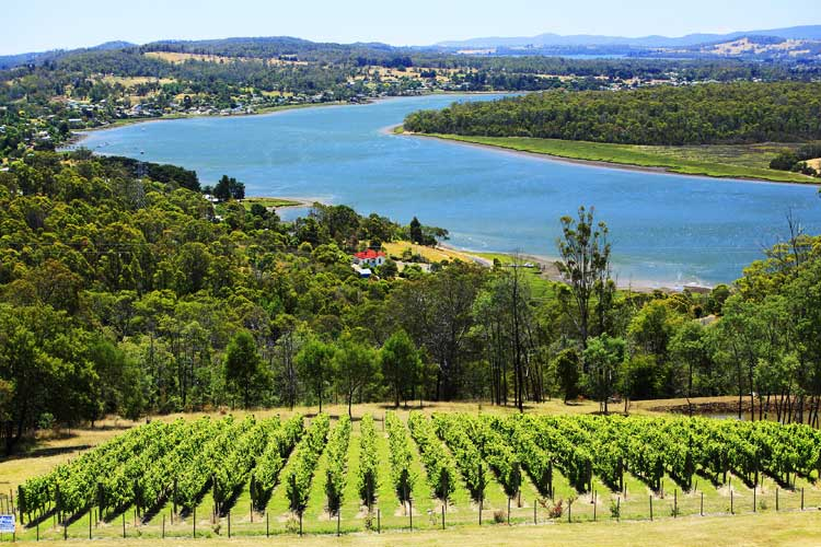The meandering Tamar winds its way into Launceston, you can grab a bargain with views like this
