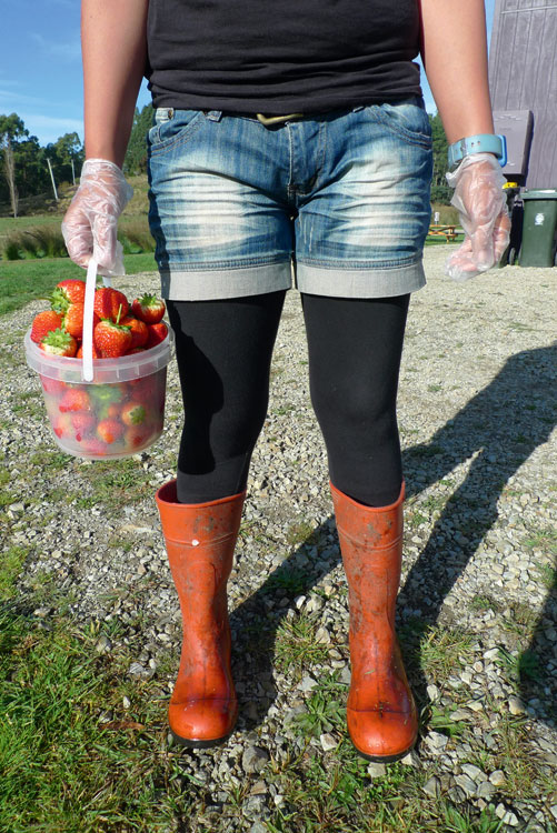 A WWOOFer's pickings at Bruny Island Berry Farm