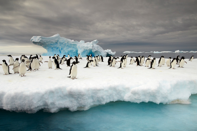 Adélie penguins congregate on the ice as storm clouds roll in across Commonwealth Bay.