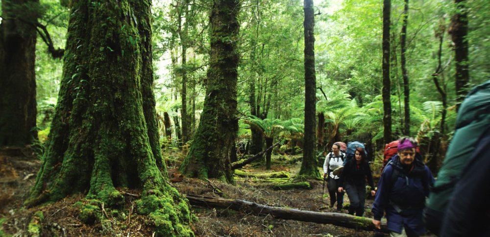 Image courtesy of Tourism Tasmania.