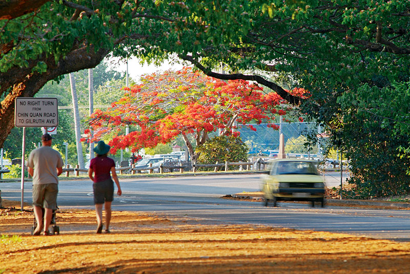 Flame trees on the wide roads of Darwin. Image by Steve Strike