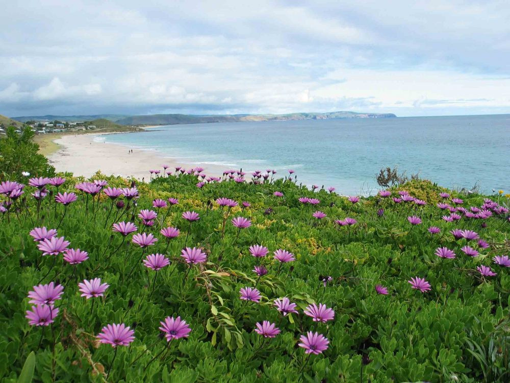 Carrickalinga Australia  city photos gallery : Fleurieu Peninsula, South Australia | Australian Traveller