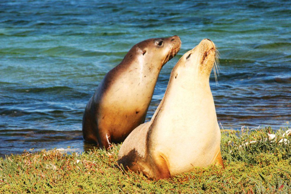 Seals off Leo Island