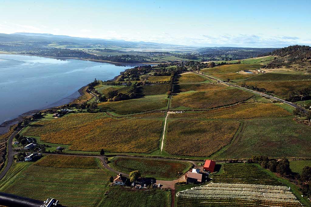 Ninth Island vineyards