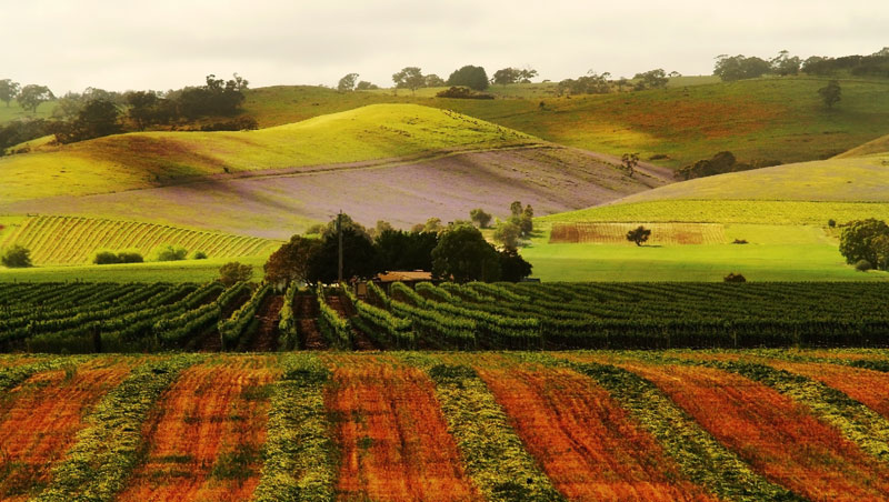 A wine-tinted rainbow of colours covers the Barossa Valley.