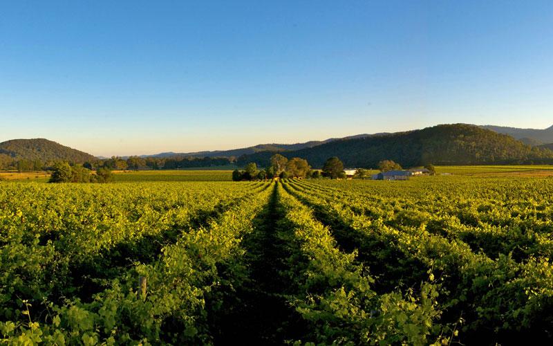 Christmont King Valley