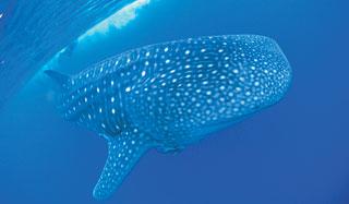 Coral-Bay-Whale-Sharks-custom-fields