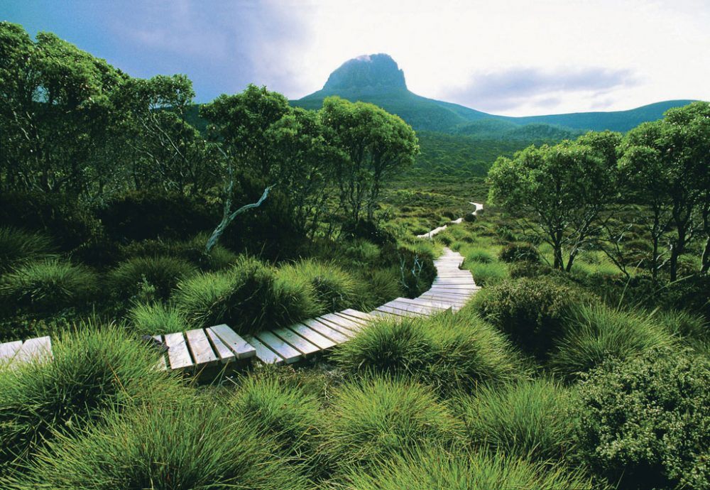 The lush green of Cradle Huts Walk, Tasmania.