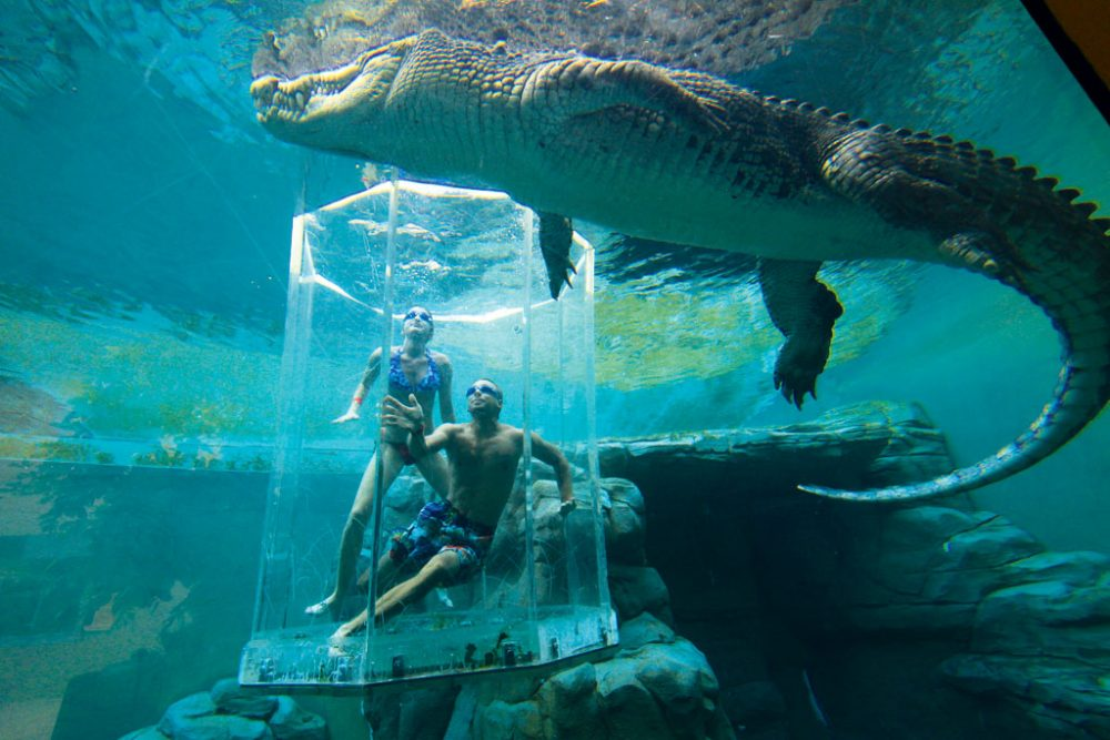 Crocosaurus Cove, Cage of Death, Darwin