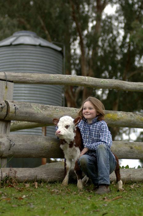 Cuddle a calf on Farm Day