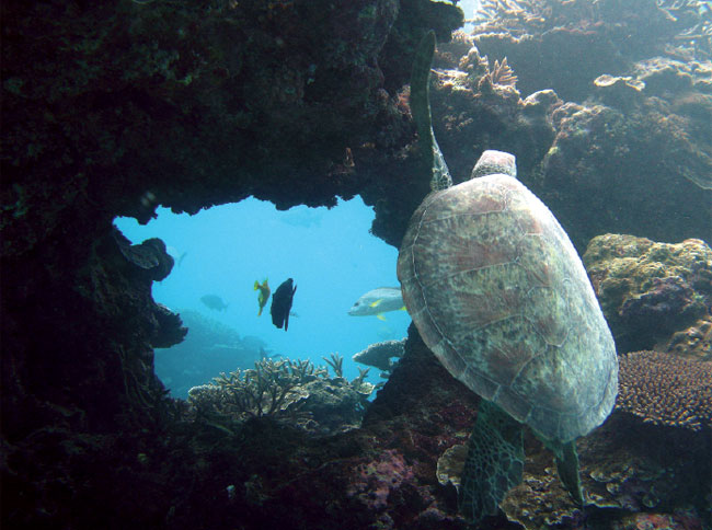 The Turtle Tunnel offshore from Lady Elliot Island, Image by Marty Lei