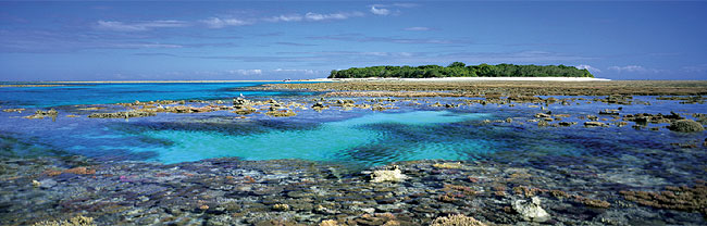 Lady Musgrave Island. Image by Tourism Qld