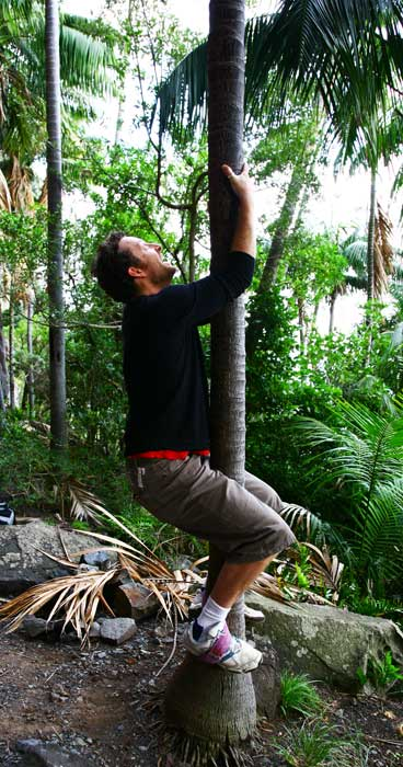 Editor Greg Barton attempts (albeit poorly) the traditional climb of a Kentia Palm.