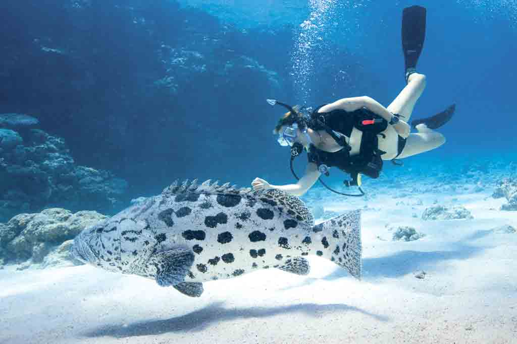 3. Lizard Island, Great Barrier Reef, QLD