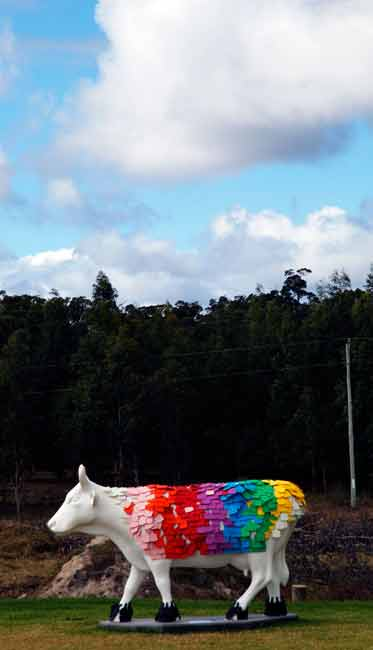 A Cow Of Many Colours at the Colonial Brewery
