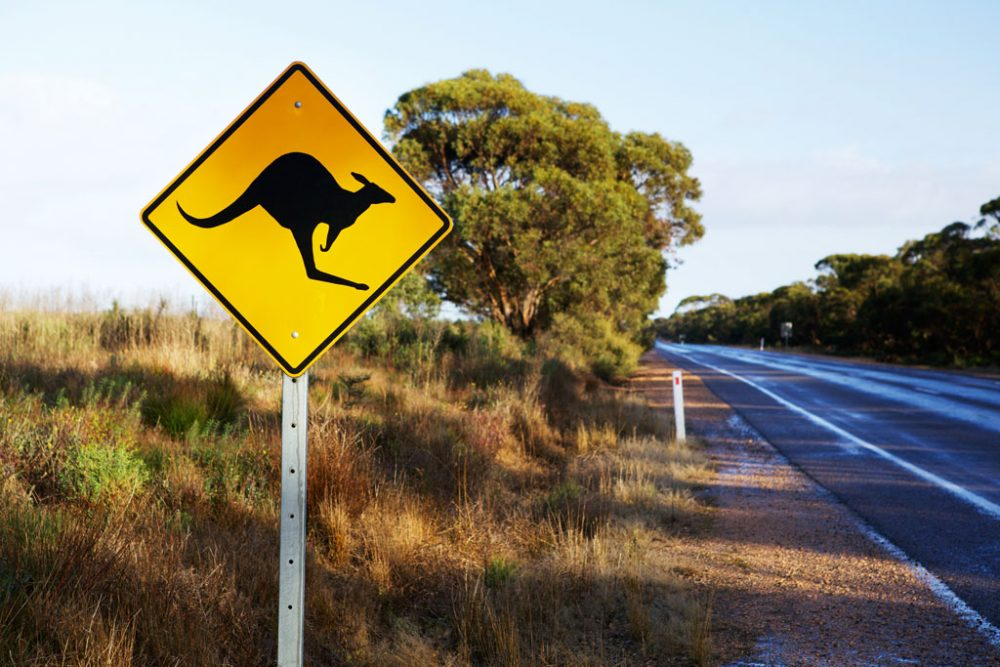Kangaroo sign on Mallee highway