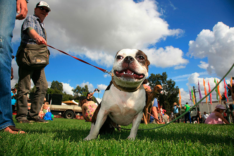 Newtown Festival Dog Show – Hero Dog -- is by Marilia Ogayar.