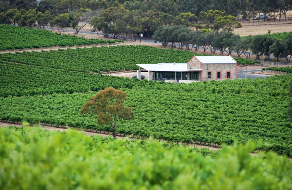 Warboys Vineyard in McLaren Vale