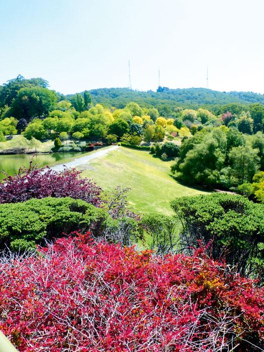 Botanic Gardens, Mount Lofty, SA
