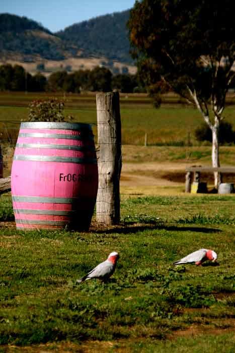 The Pink Barrels at Frog Rock Cellar Door (Image Liz Schaffer)