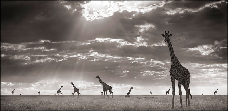 Just one of the stunning images from Nick Brandt's A Shadow Falls exhibition.