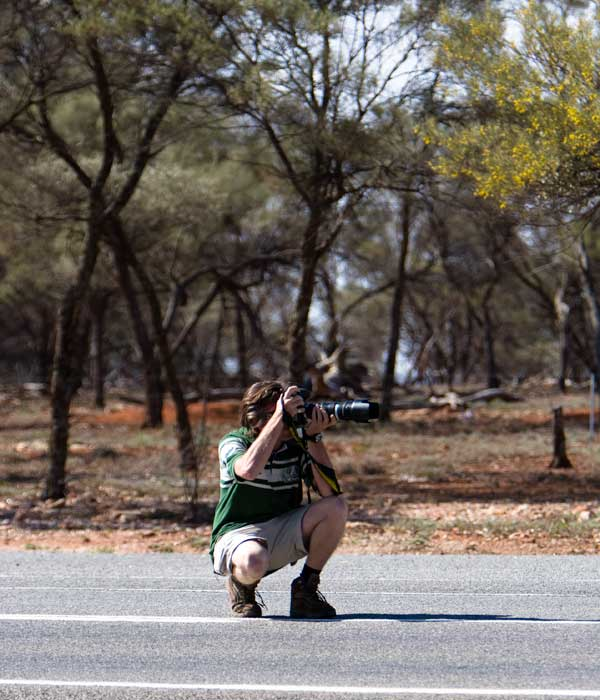 A professional photographer photographing wild goats on the deserted highway between Cobar and Broken Hill in NSW