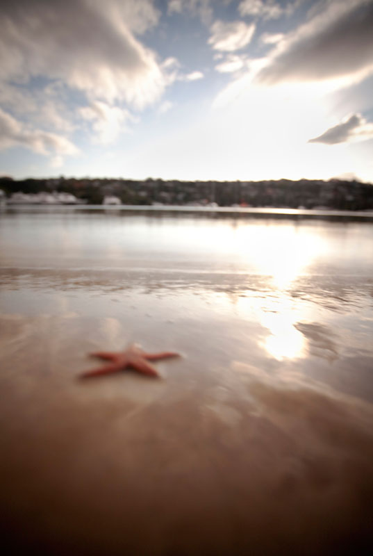 A starfish catches the sunrise at The Spit Harbour.