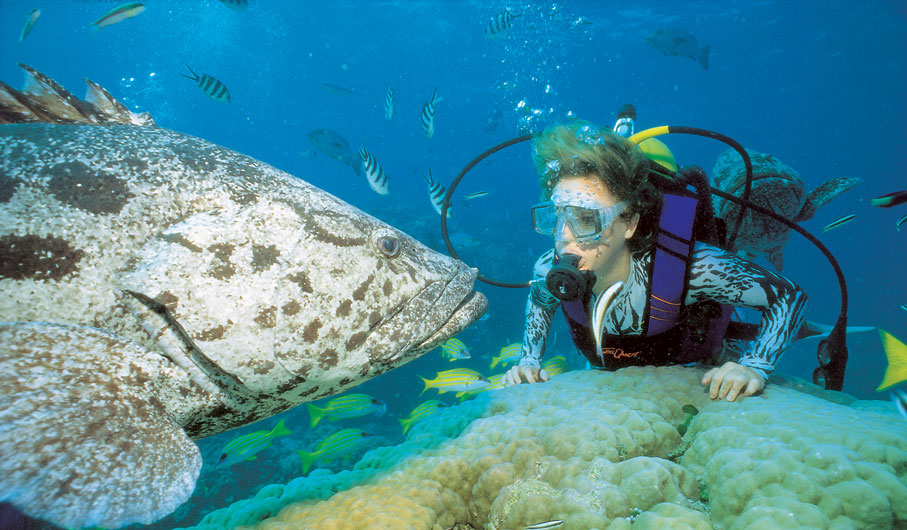 100 things to do before you die 036 dive the great - Best place to dive the great barrier reef ...