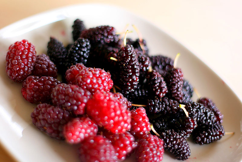 Pick your own berries in the Southern Highlands at the Montrose Berry Farm.