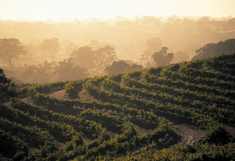 Eden Valley of the Barossa. One of the many homes of the Barons of the Barossa. image by Tourism SA