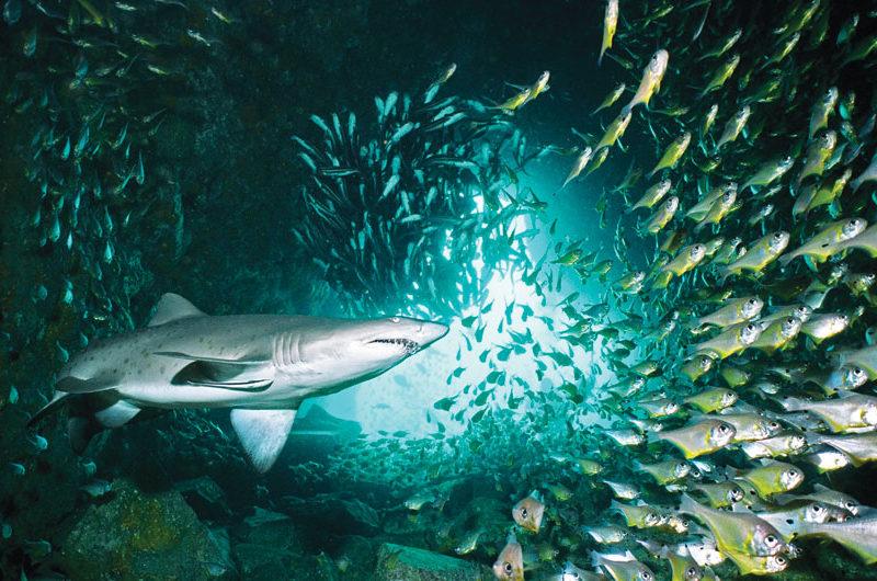 Fish Rock Cave Dive, South West Rocks, NSW.