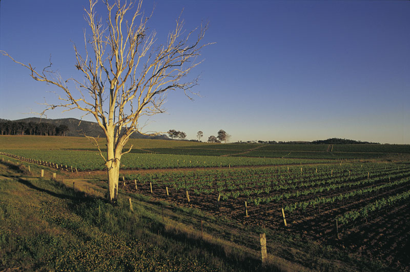 Hunter Valley high life