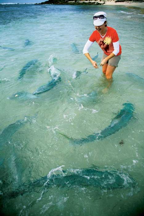 Feeding the King Fish at Ned's Beach.