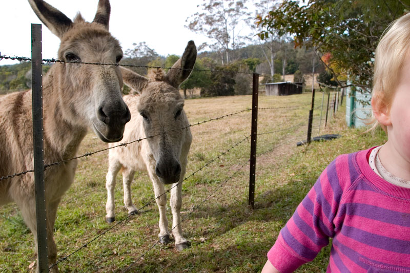 Ruby meets some donkeys for the first time. Image by Robyn Rosenfeldt