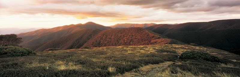 The one true Razorback . . . and Mt Feathertop, Victoria's second-highest peak.