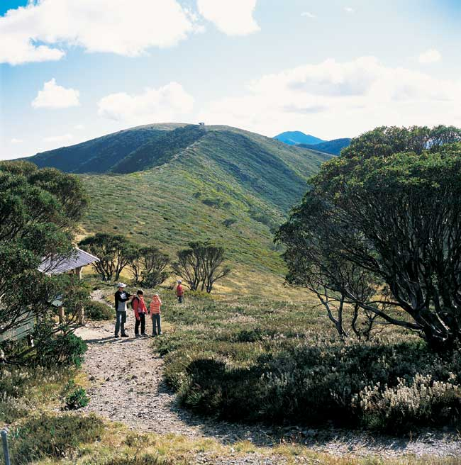 Walking the Razorback Ridge between Mt Hotham and Mt Featherstone.