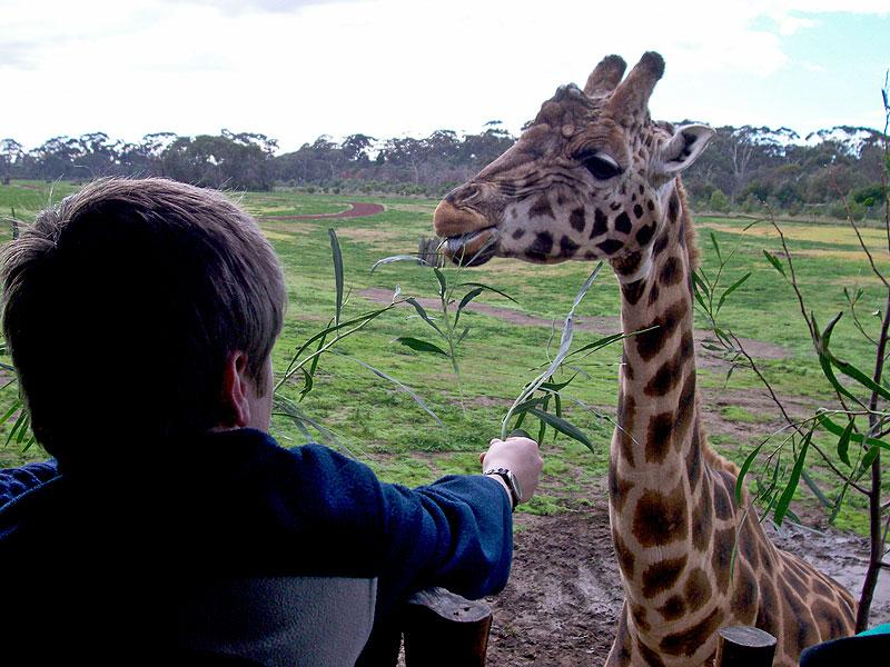 Behind the scenes at Werribee Open Range Zoo