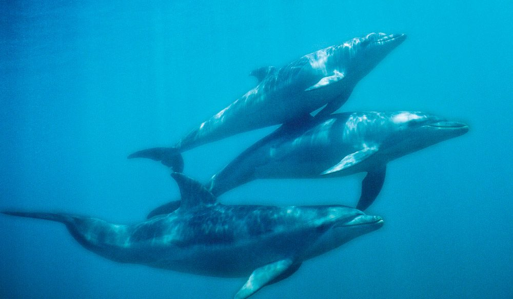 The area is best known for its resident dolphin pods