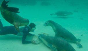 Baird Bay Ocean Eco Experience, SA - Image by Baird Bay Eco Experience
