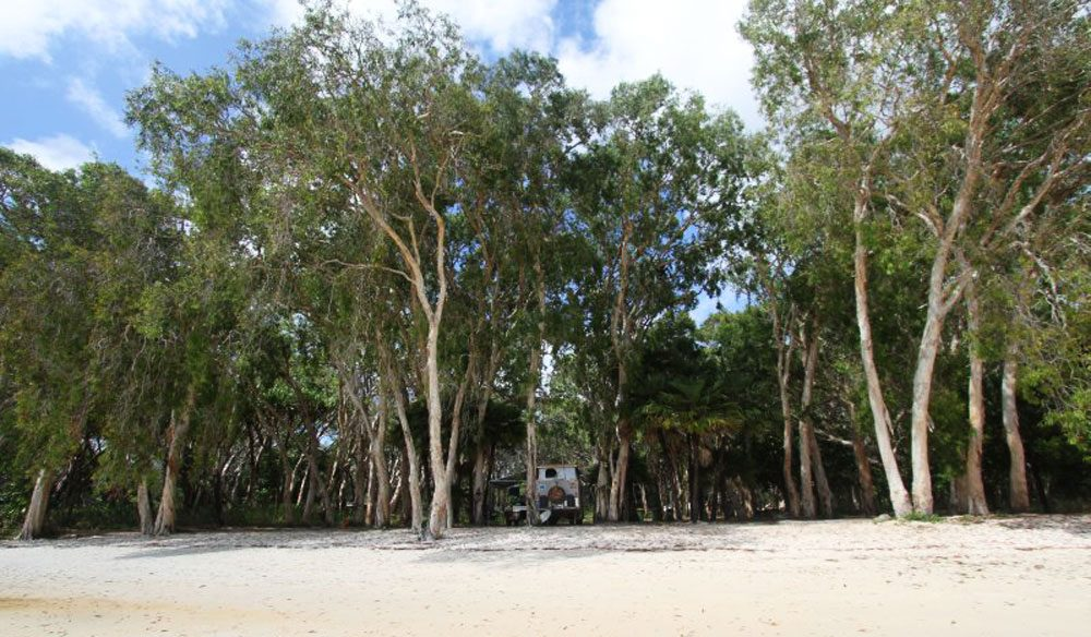 Elim Beach Campground near Hopevale, Qld