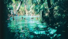 Mataranka Thermal Pool, Northern Territory