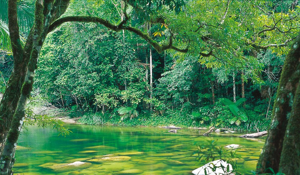 Mossman Gorge, QLD - Image by Tourism QLD