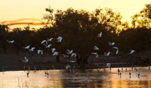 Broken Hill NPs-