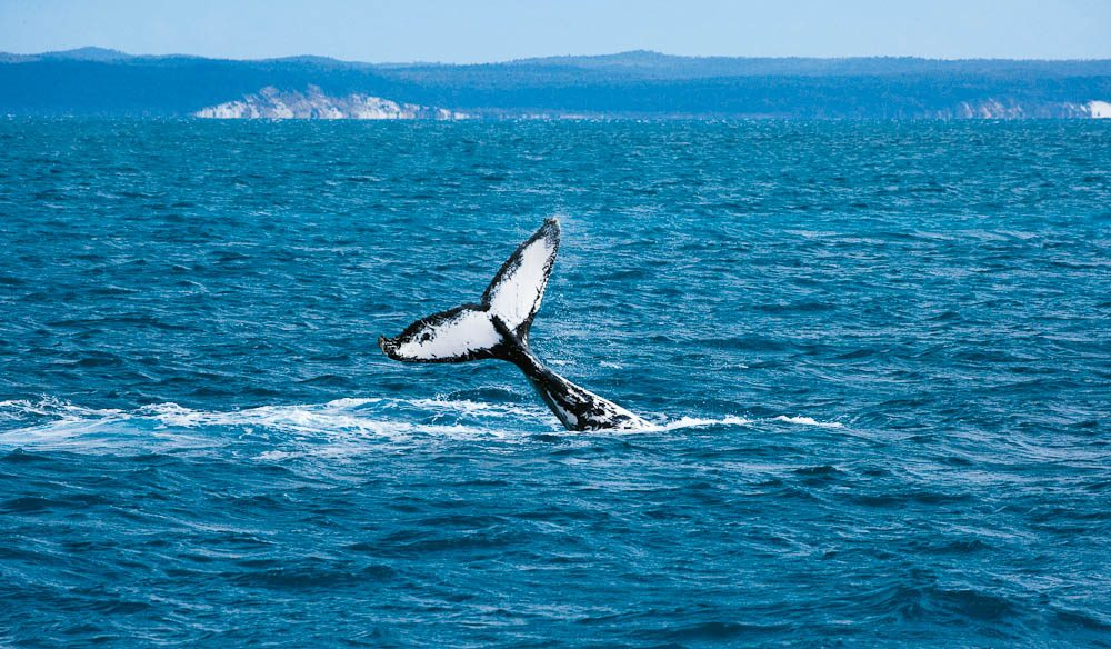 Tails have it: Hervey Bay, Whale Watching
