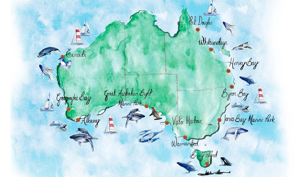 Best places to watch whales in Australia